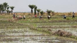 Rice for Burundi